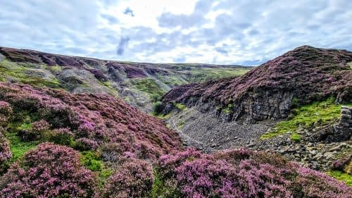 Heather flowering above Gunnerside Gill