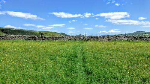 Hay meadows in Wensleydale