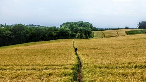 Through the fields to Ripon